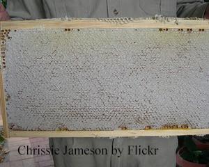 Chrissie Jameson