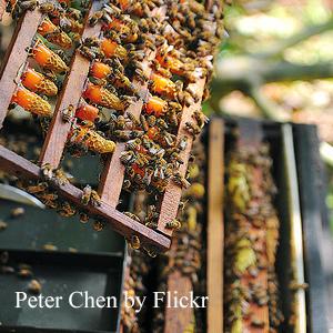 Peter Chen (2)