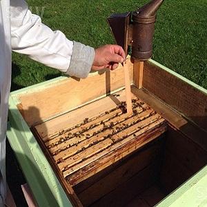 Пасека как бизнес: разведение пчел, торговля медом
