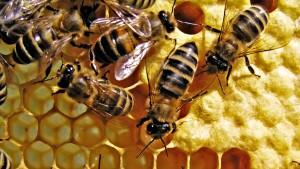 мед в улье