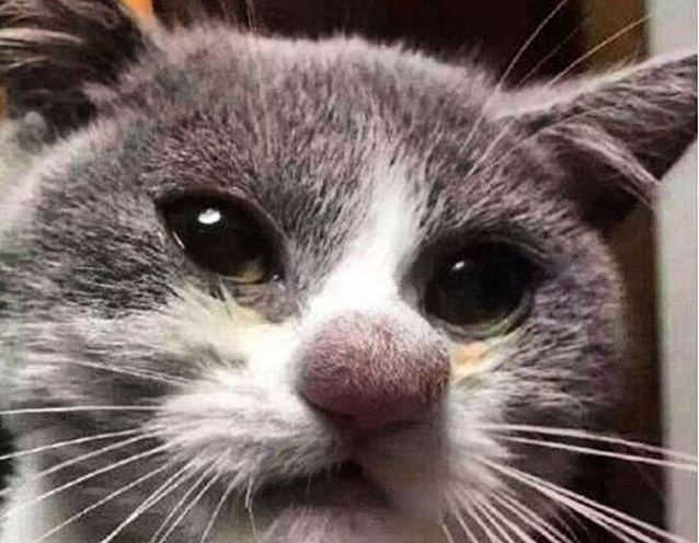 Кота укусила в лапу оса