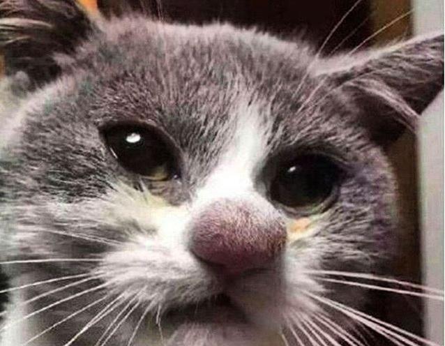 оса укусила собаку фото