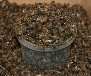 Жареный подмор пчел - фото
