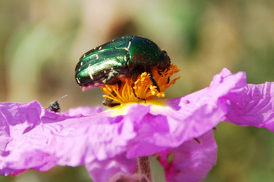 beetle-61681_960_720