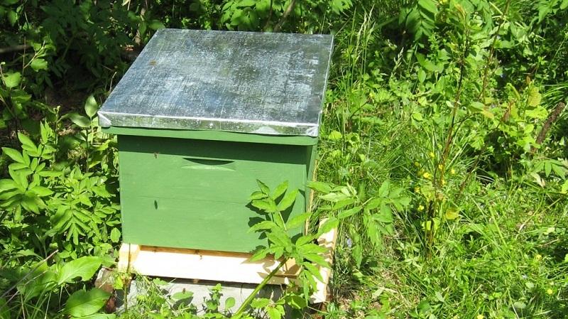 Фото с сайта: loveanimal.ucoz.com