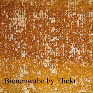 Bienenwabe (5)