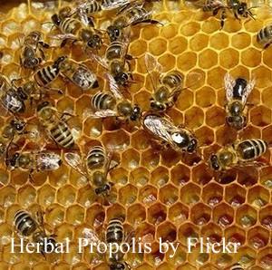 Herbal Propolis