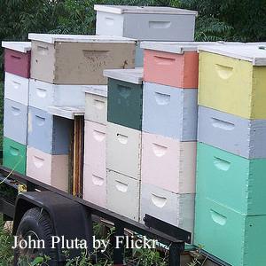 John Pluta