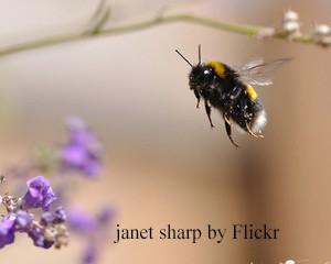 janet sharp (2)