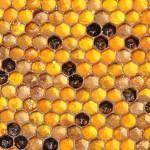 Соты с незаполненными ячейками - фото
