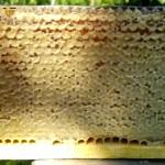 Соты пчелиные полные меда - фото
