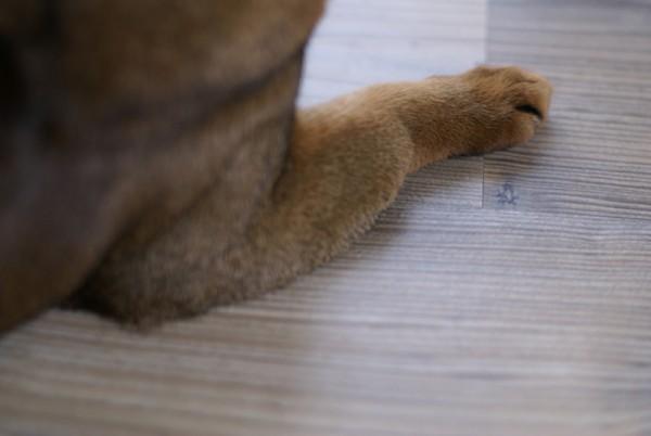 Фото с сайта: ru-cats.livejournal.com